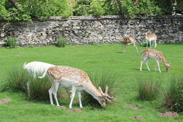 A review of family friendly Bradgate Park