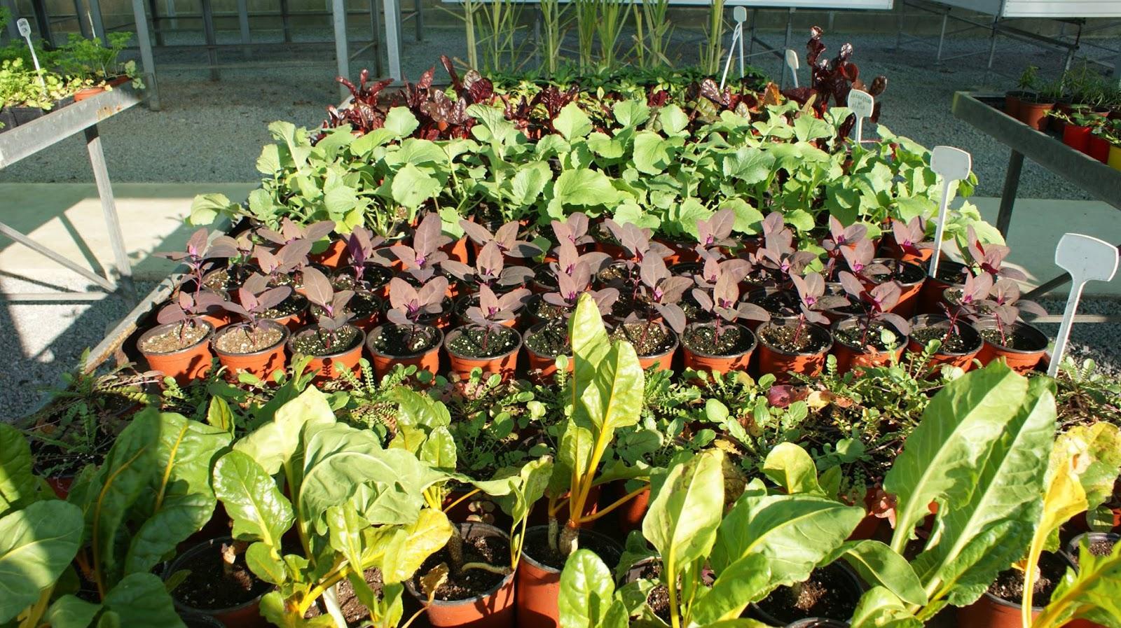 http://www.cantinhodasaromaticas.pt/loja/plantas-em-vaso-bio/
