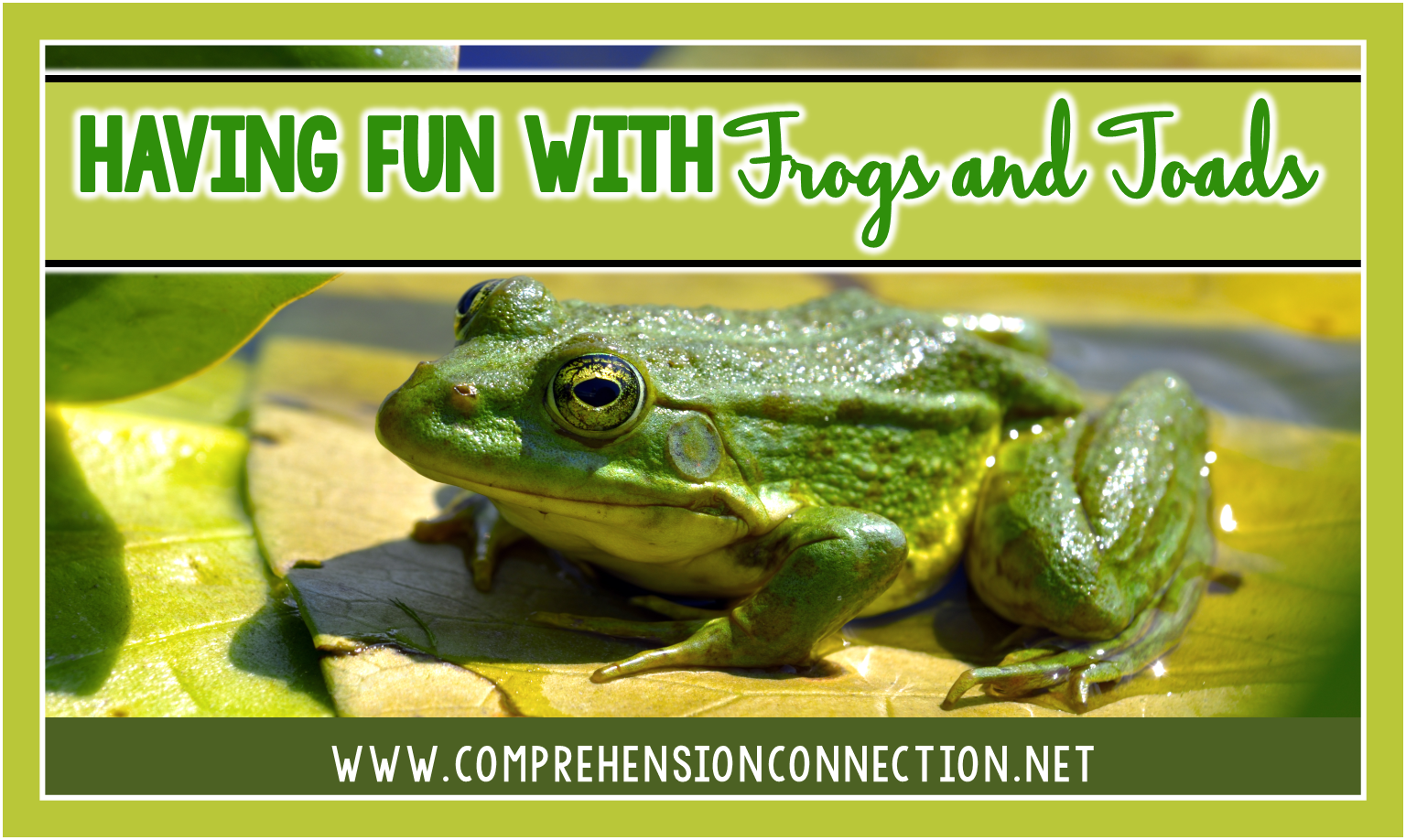 Kids are really drawn to icky things, aren't they? Well, why not use the ick factor to your advantage with a frog and toad themed week?  This post will get your planning started.