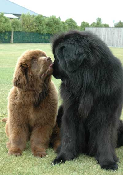 What Is The Big Fluffy Dog Called