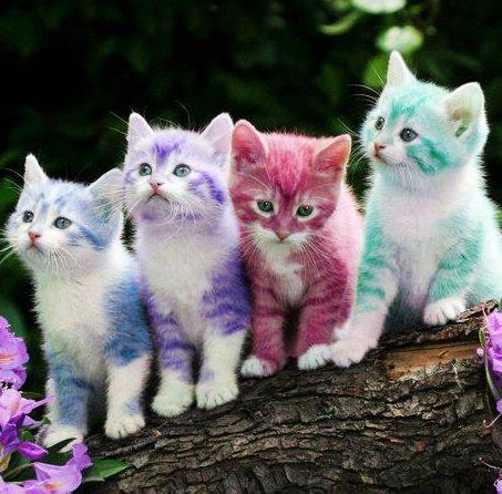 Apakah Kucing Jantan Belang Tiga Memang Benar Benar Sakti Kaskus