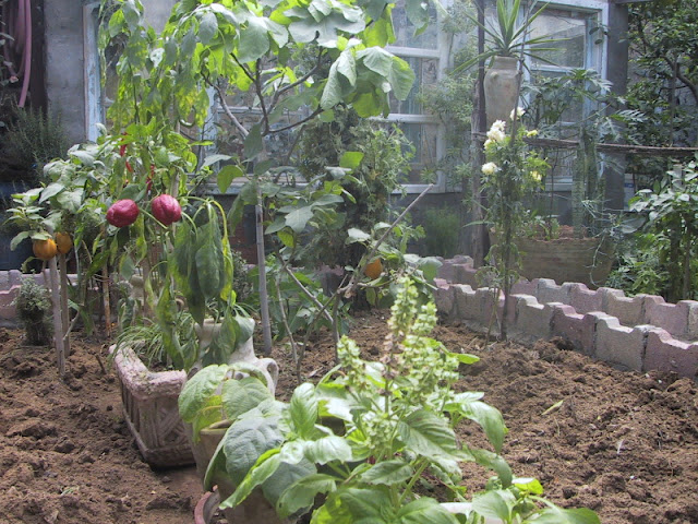Different fertilizers are recommended for different purpose in the garden.  One for roses,one foe containers and one for vegetables. Each has a different formula of chemicals.