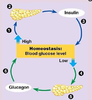 Sel dan Homeostatis