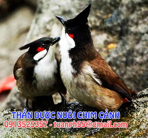 Thần dược biến chú chim ốm yếu thành khỏe mạnh đầy màu sắc - 1