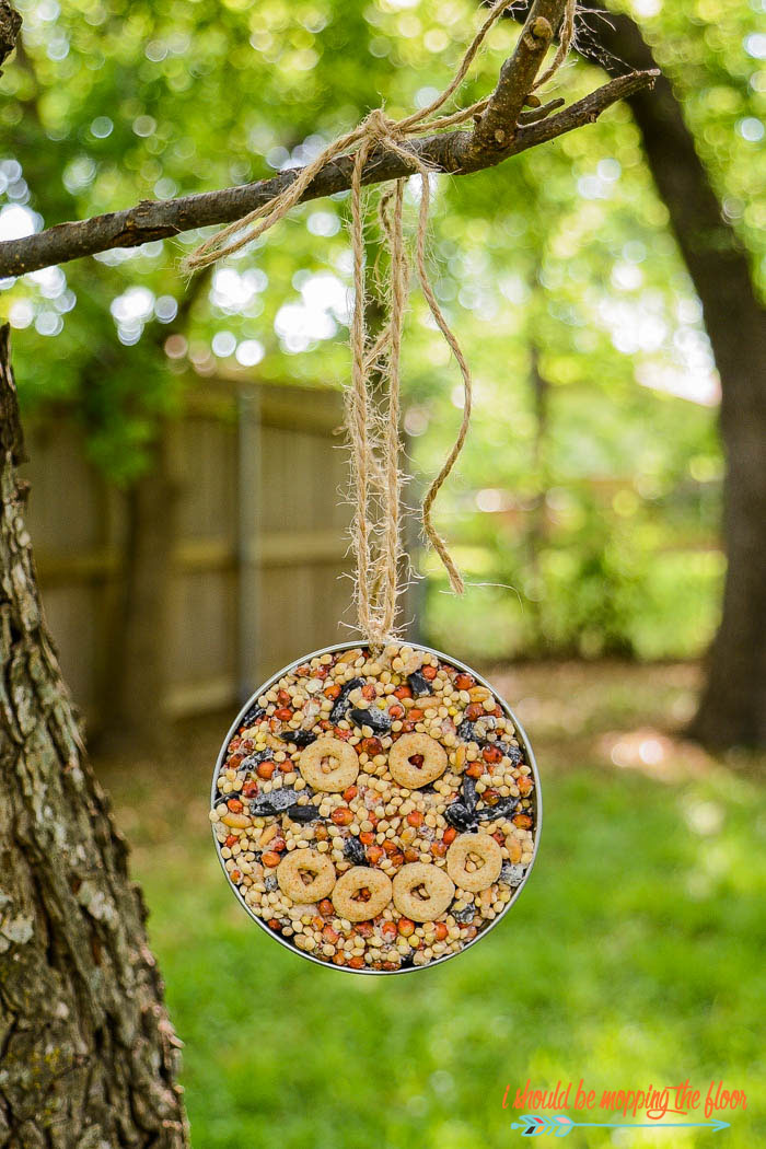 Mason Jar Lid Bird Feeder | Make this simple bird feeder inside of a canning lid. This is a great project to do with kiddos.