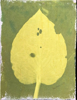 Solarfast prints_Sue Reno_Image 13