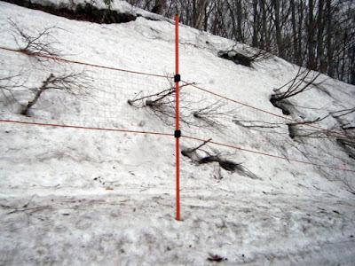 5月初めの八甲田山麓の雪