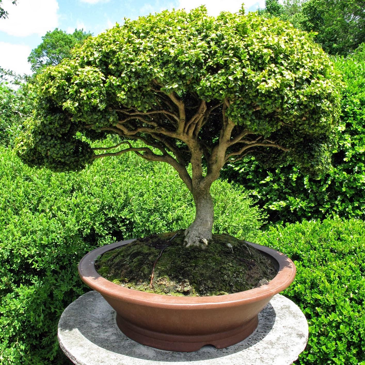Debe un bons i ser viej simo verde jard n for Arbolitos para jardines pequenos