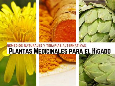 5 Plantas Medicinales para mantener la Salud del Hígado: Cúrcuma, Diente de León, Alcachofa..