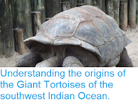 http://sciencythoughts.blogspot.co.uk/2017/02/understanding-origins-of-giant.html