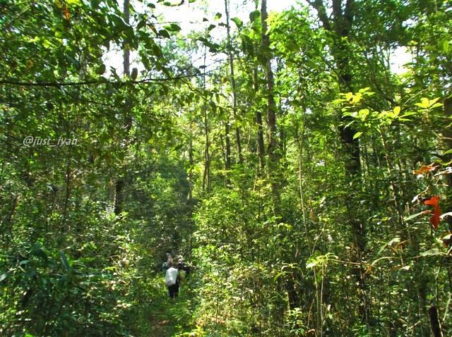 Trekking Asik di Taman Ekowisata Aek Nauli