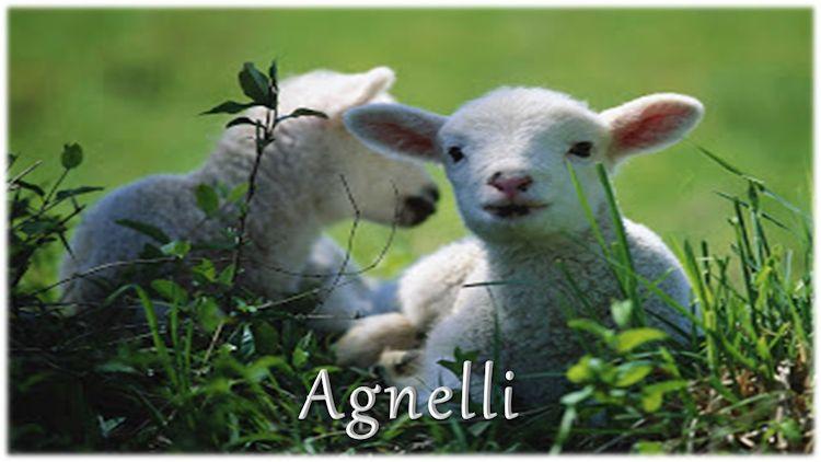 Le fibre tessili di origine animale la lana