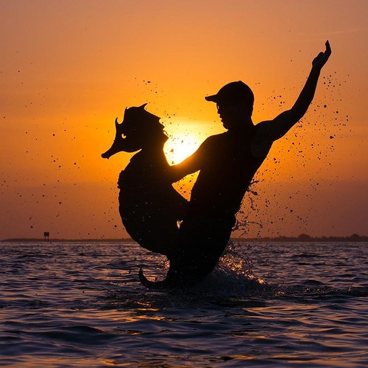 14-Seahorse-Riding-John-Marshall-Sunset-Selfie-Photographs-with-Cardboard-Cutouts-www-designstack-co