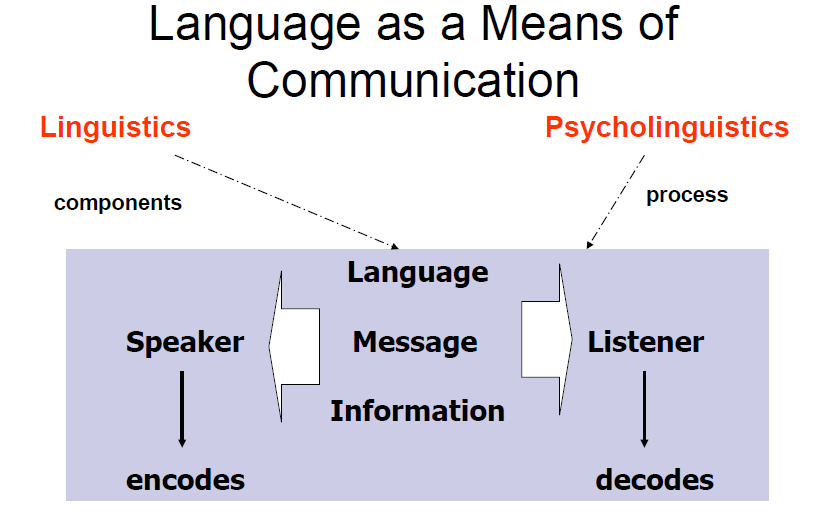psycholinguistics extra notes Linguistics courses lecture notes and other study materials for this an exploration of psycholinguistics– language processing is covered in this.