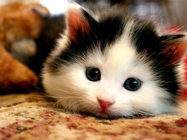 Cách giúp mèo cưng sống lâu và khỏe mạnh hơn