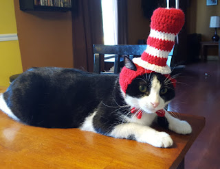 Cat in the Hat hat for a cat. What a great Halloween costume idea for a cat!
