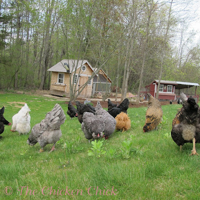 4/21/12: The location to the left of the Little Deuce Coop was chosen for its level ground and shade.