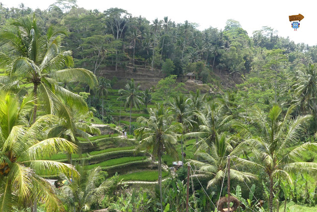 Terrazas de Tegallalang - Bali