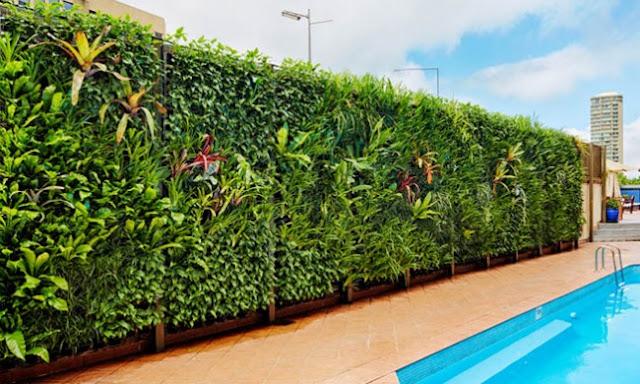 Plants in Wall 5