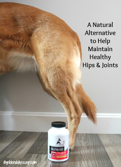 a natural way to maintain your dog's hips and joints with Nutri-Vet supplements