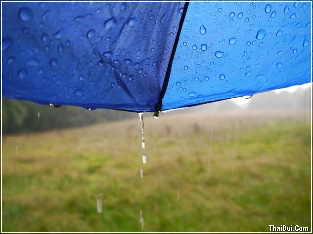 ảnh ô dù và mưa