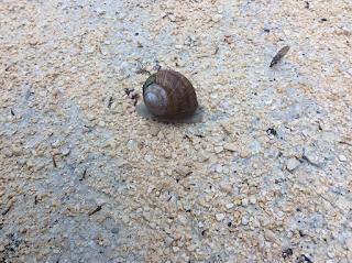 Ich fand eine Schnecke auf dem Weg im Schloßpark Herten