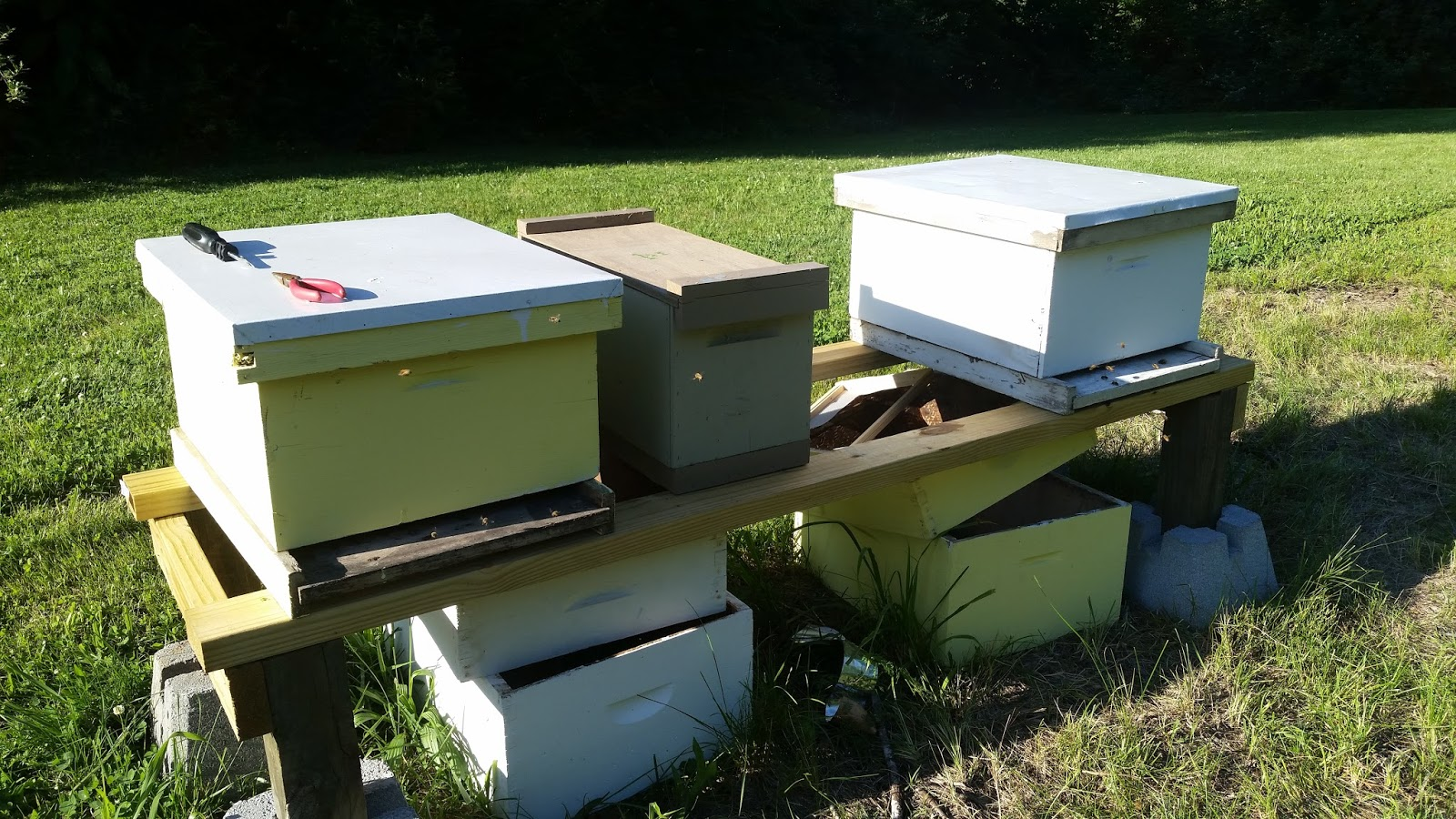 My Top Bar Bee Hives: Trying some Langstroth hives