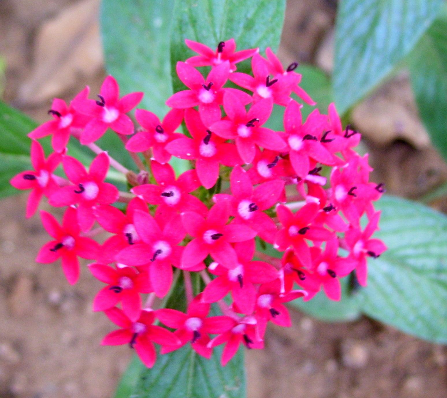 Daisy Flower Name In Tamil Flowers Online 2018 Flowers Online