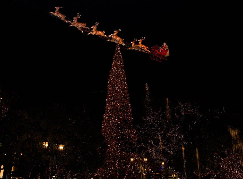 Christmas Tree Store Staten Island