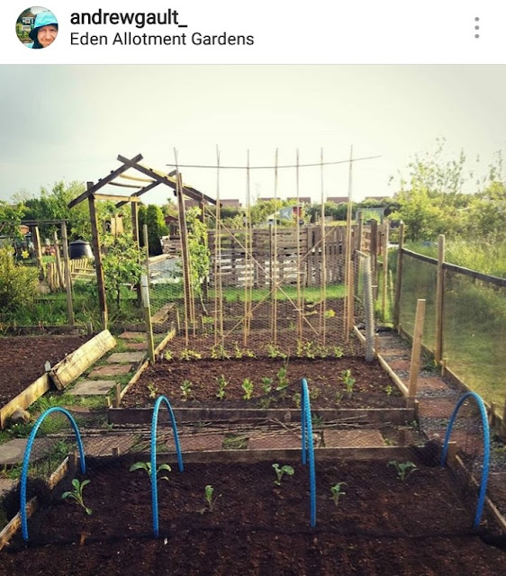 Andrew's allotment Instagram photo - Carrie Gault 2018