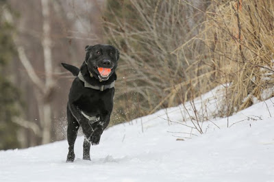5 best training tips for dogs successfully