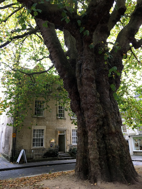 historic stone building beside a huge sycamore tree