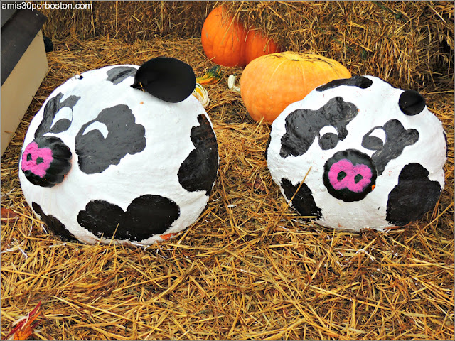 Calabazas Decoradas para Halloween: Vacas