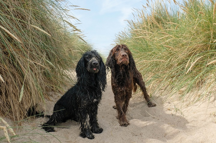 Dog Friendly Guide to Northumberland