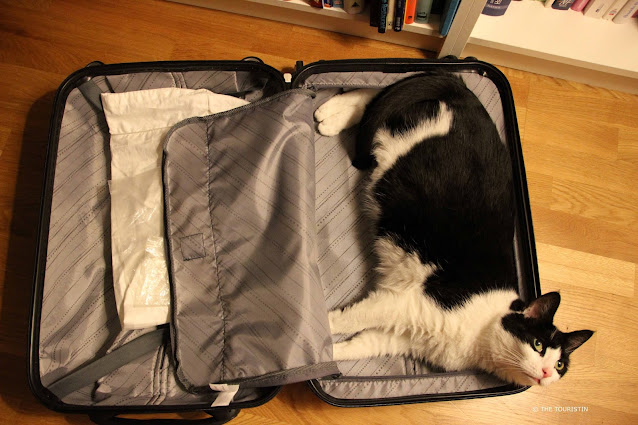 Friendly black and white cat, lying on the left side in a grey open suitcase