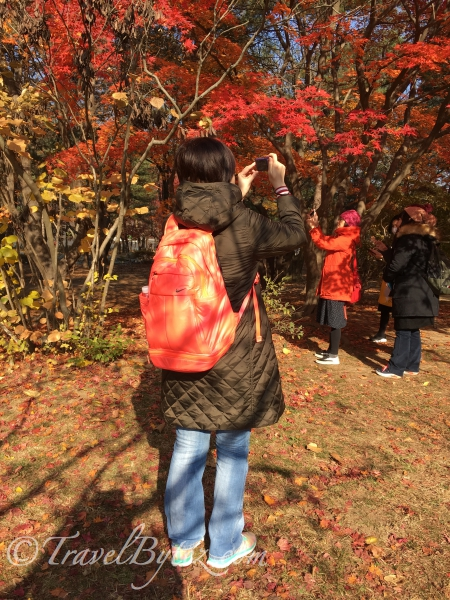 Nami Island Autumn Photos