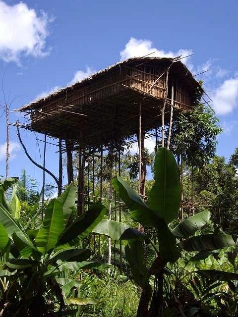 casa sobre varas a altura media con matas de plátano alrededor