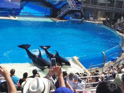Sea World Sandiego Photos