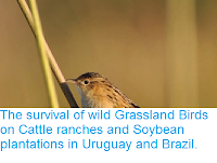 http://sciencythoughts.blogspot.co.uk/2015/03/the-survival-of-wild-grassland-birds-on.html