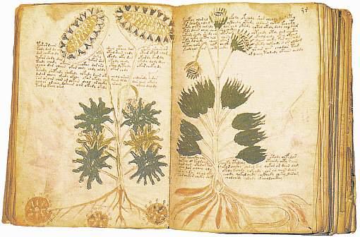 Voynichin Käsikirjoitus