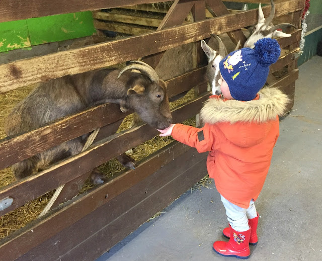 hand feeding a goat at whitehouse farm