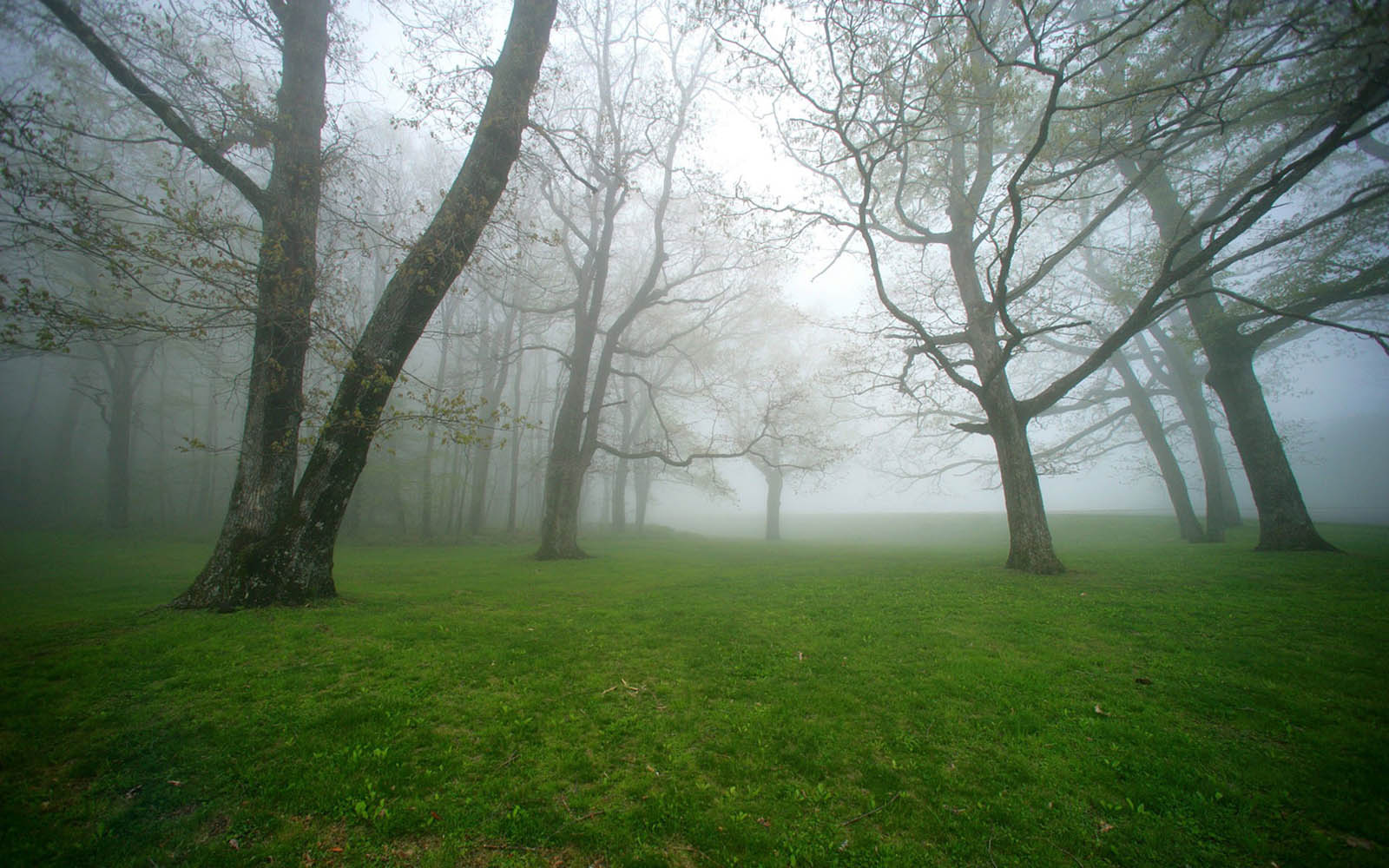 GambarGambar Kabut di Pagi Hari yang Sangat Indah