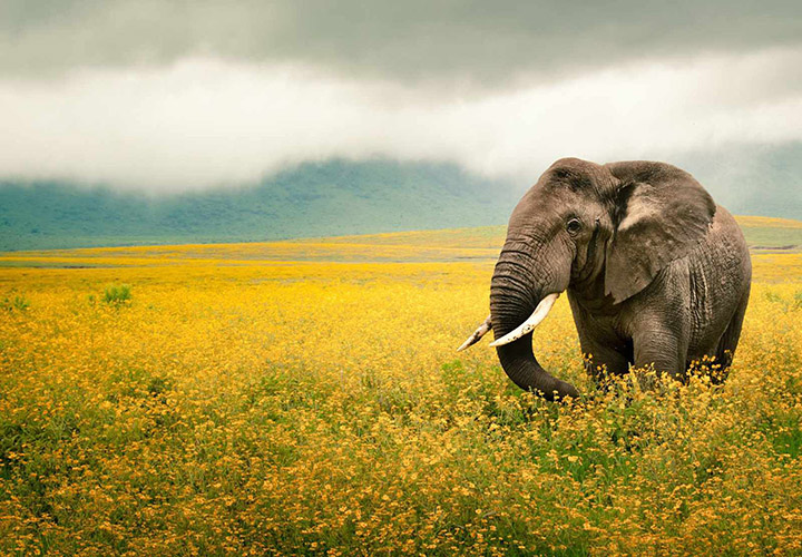fil resimleri