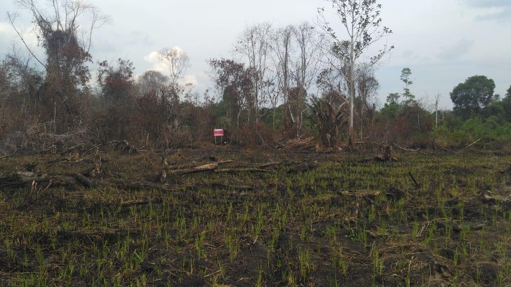 Lahan Terbakar Milik Dua Perusahaan Kembali Disegel 2