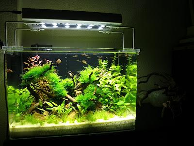 Cad creative aquarium design soy nuevo que modelo de for Peces para peceras pequenas agua fria
