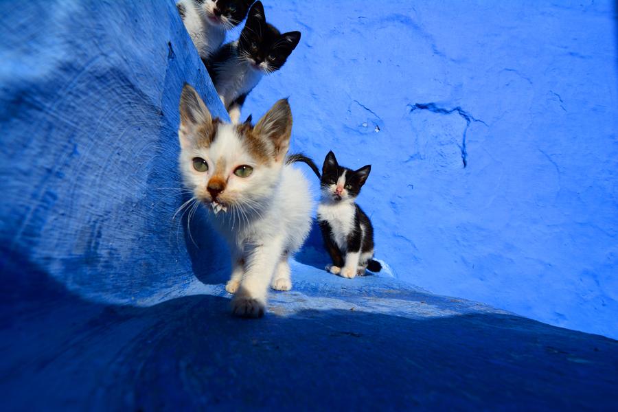 Koty Maroko