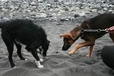 Hundestrände auf Teneriffa © Canarian Sea