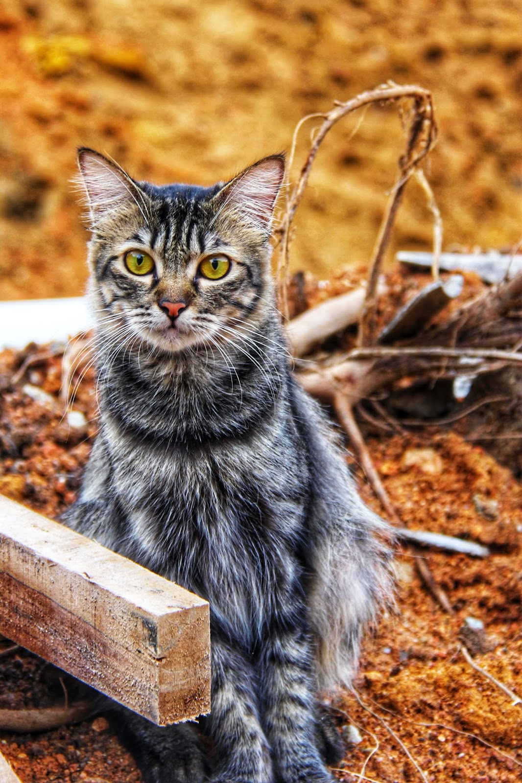 20 Koleksi Gambar Kucing Comel Bernama Tambi 13