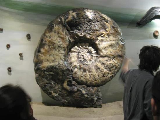 Gambargambar fosil hewan Puba Terbaru dan menakjubkan