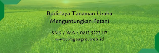budidaya tanaman,kunci sukses,benih tanaman,bibit tanaman,petani,peluang usaha,lmga agro